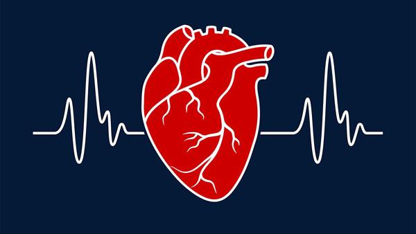 علائم نارسایی قلبی چیست؟ انواع نارسایی قلب و درمان گیاهی آن